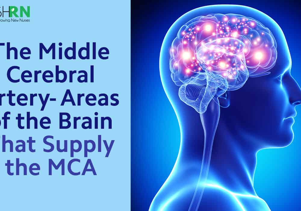 The Middle Cerebral Artery – Areas of the brain that supply the MCA